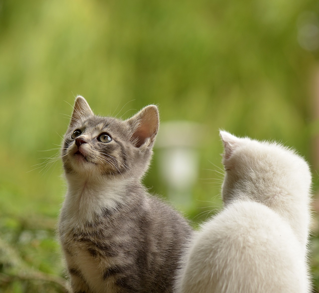 Ha råd med katt oavsett vad du tjänar