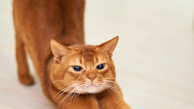 Behandlingar för katter