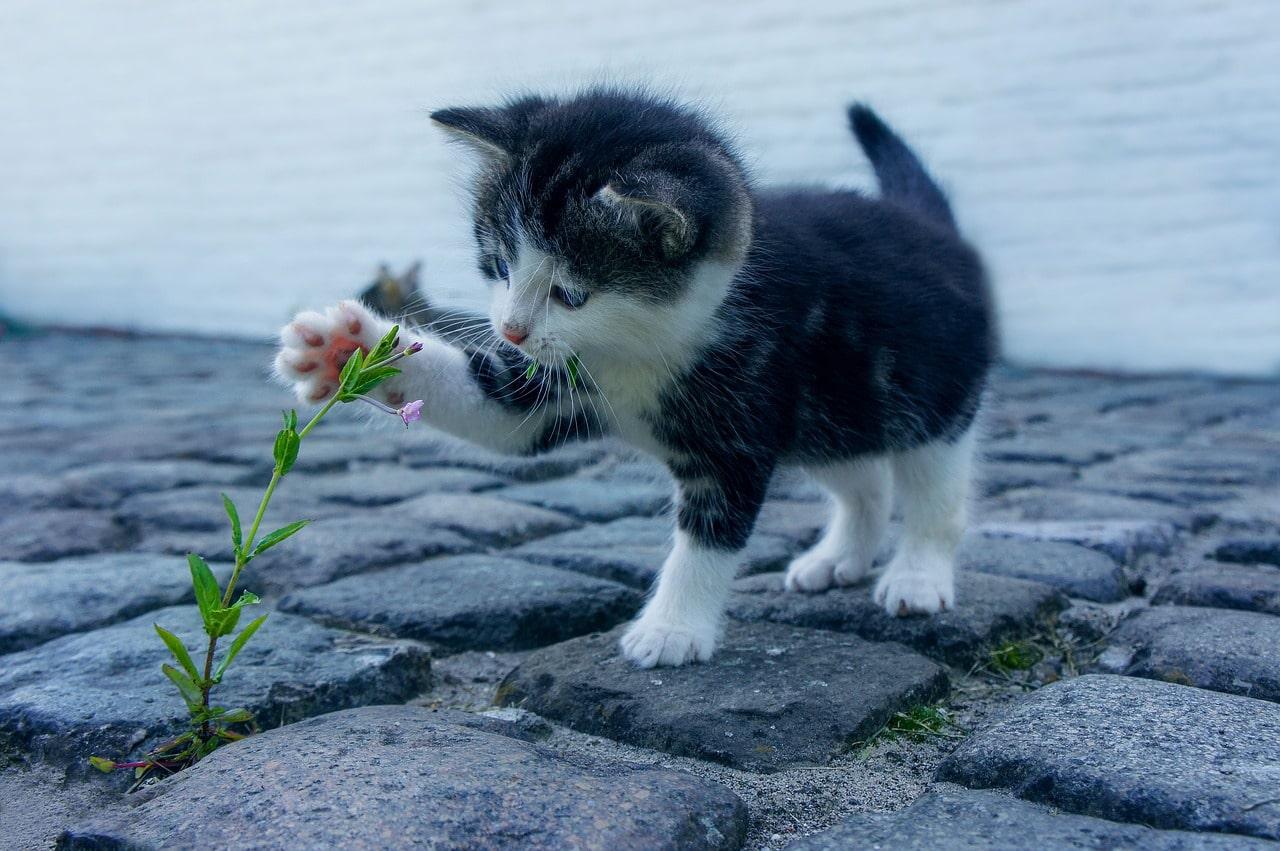 Alla kattklubbar i Sverige | En komplett lista